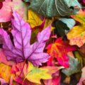 Fun Fall Activities for the Family From Custom Earth Promos